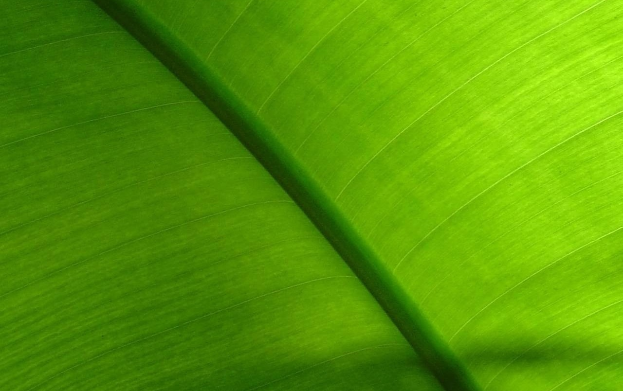 Green plant wallpapers