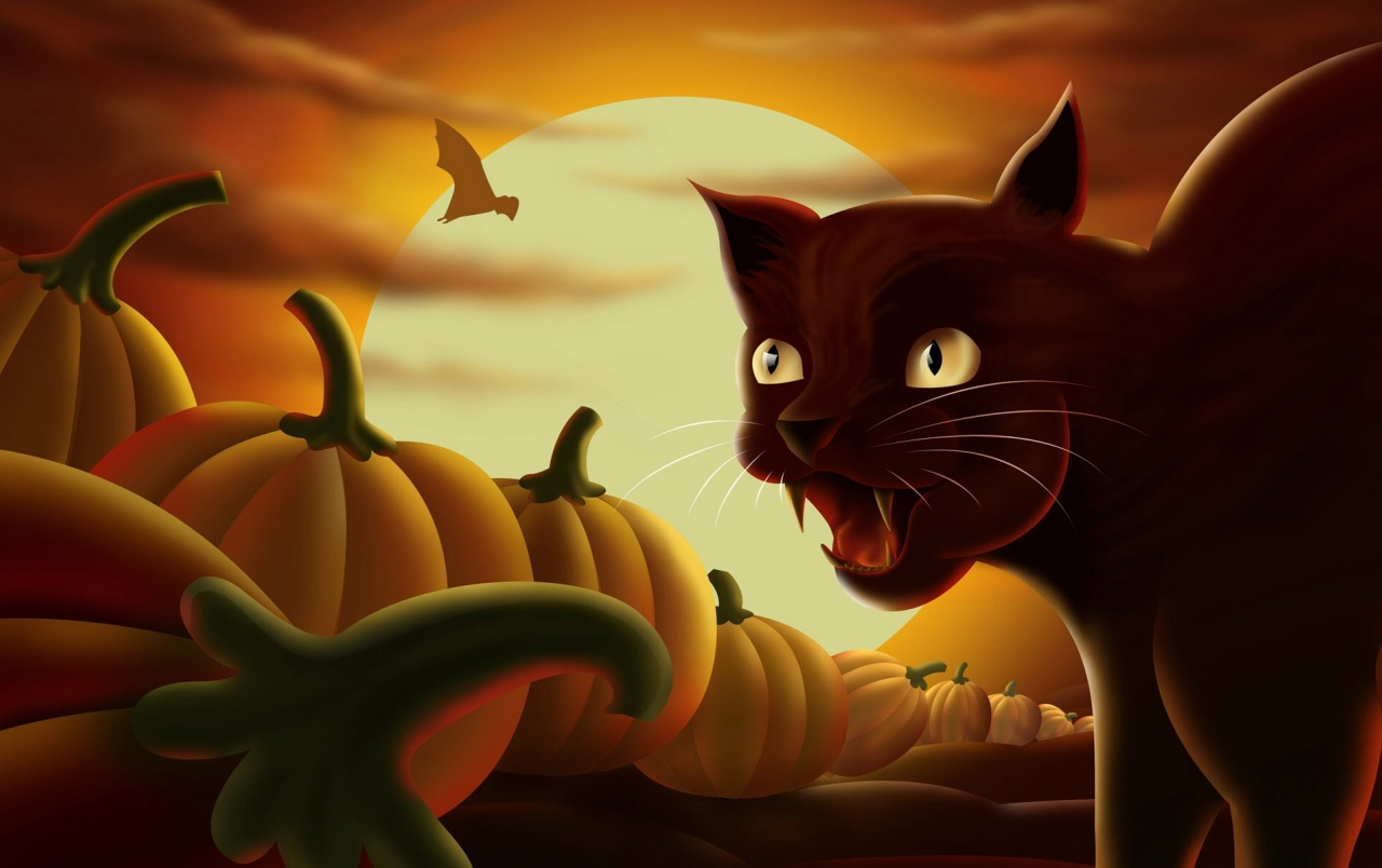 Black Cat Pumpkins Wallpapers And Stock Photos