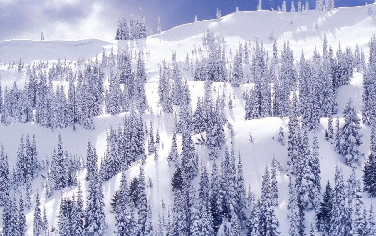 Blanco Winter Park wallpapers