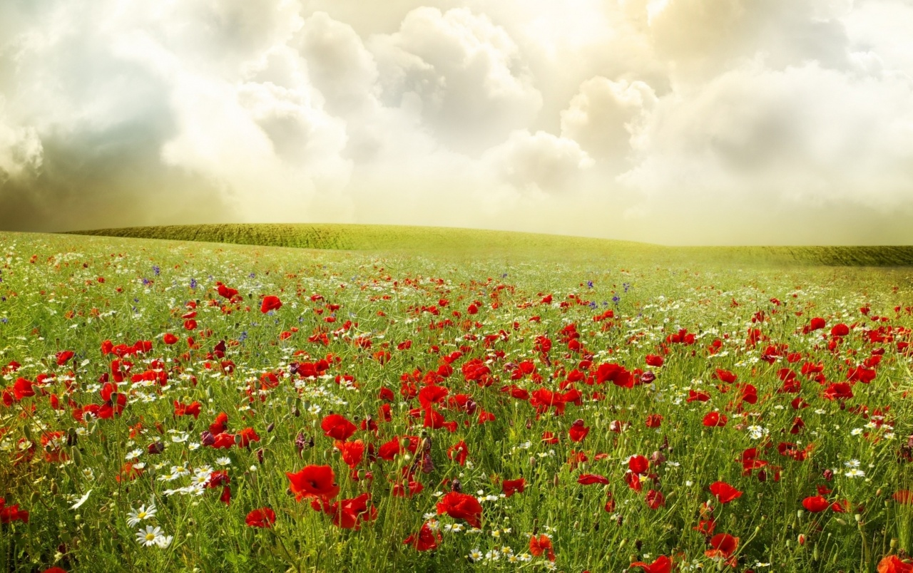 Clouds Meadow & Poppies wallpapers
