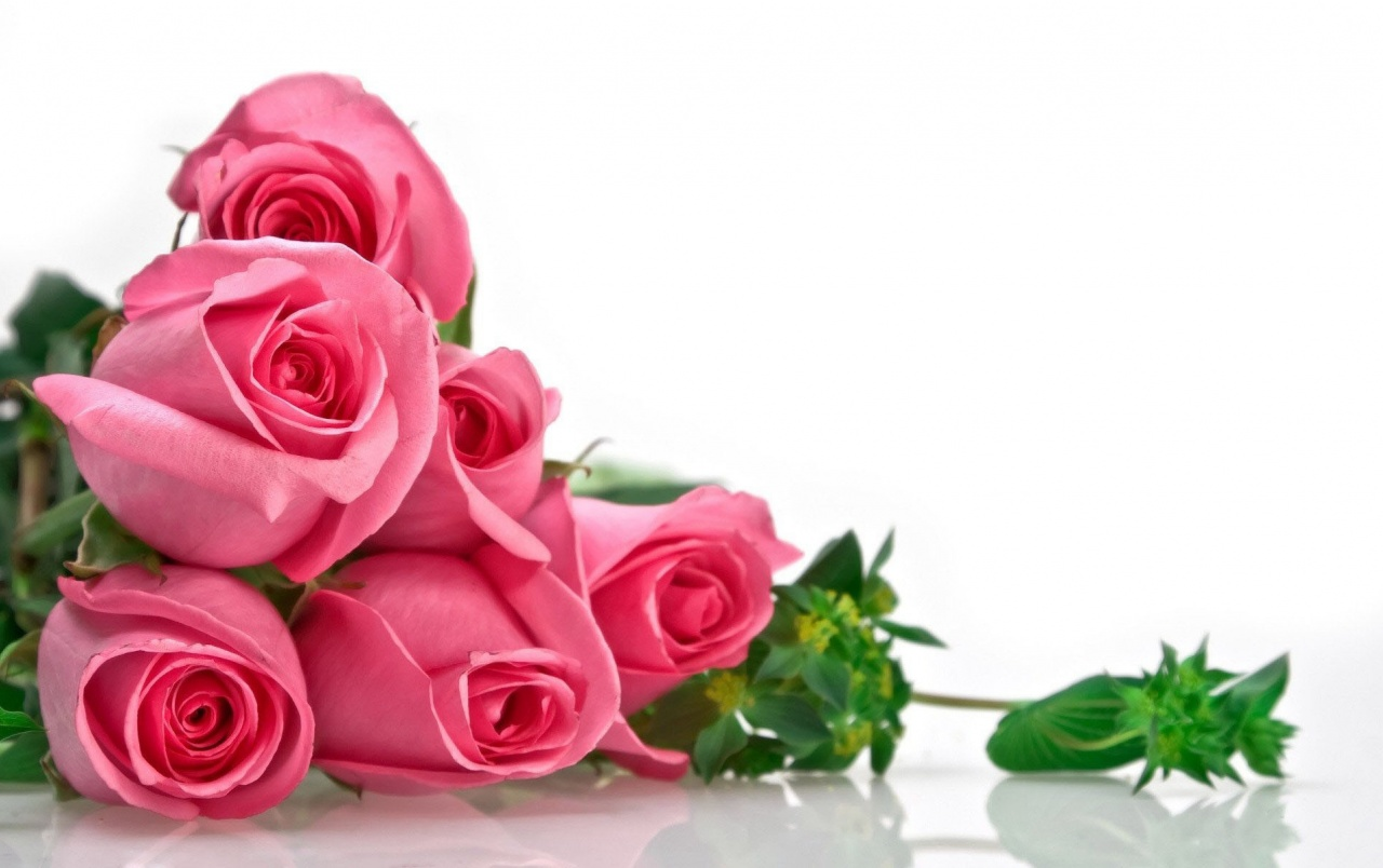 pink roses wallpapers | pink roses stock photos
