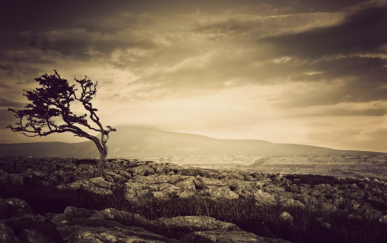 Tree Sepia wallpapers