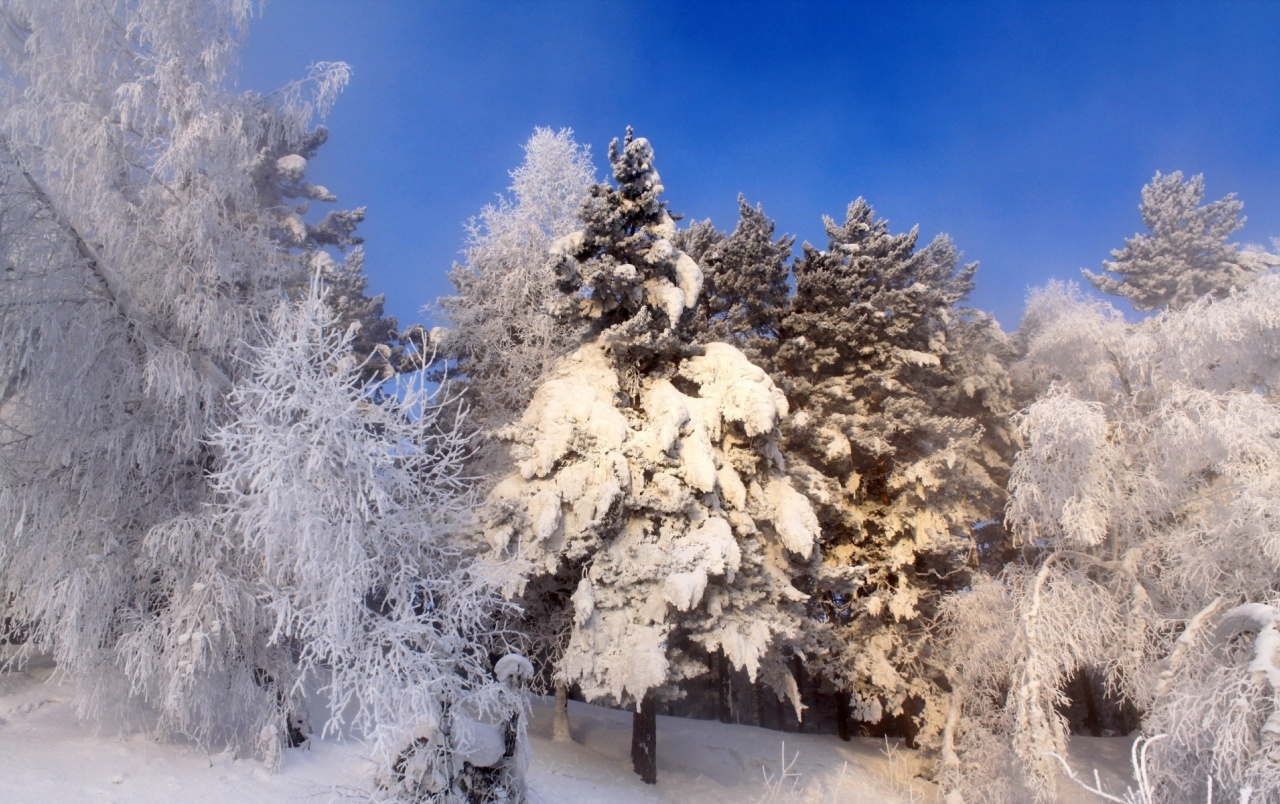 Snow Trees Thicket wallpapers