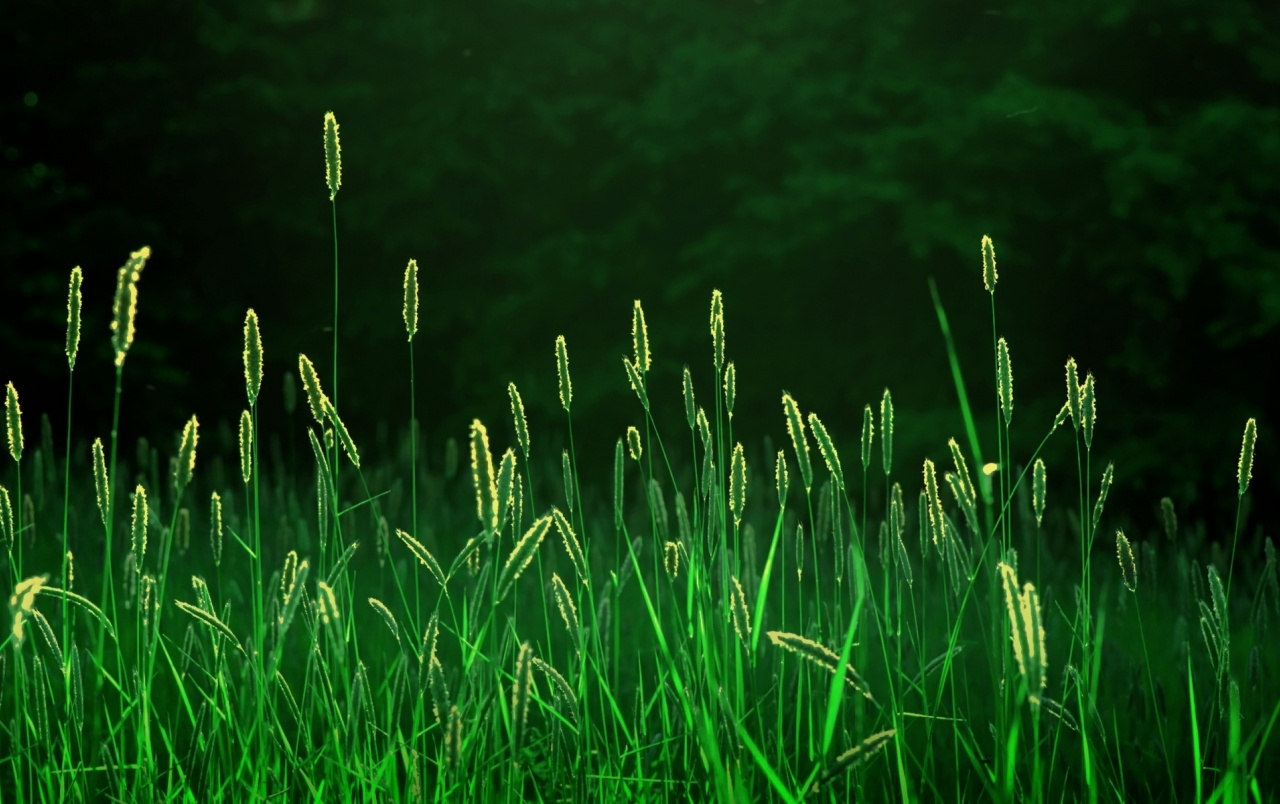 Grass Field Close Up View wallpapers