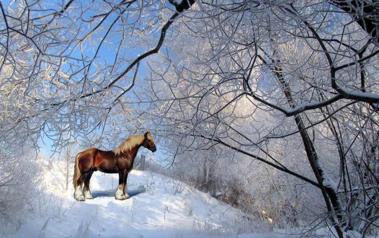 island mountain horse wallpaper - photo #30
