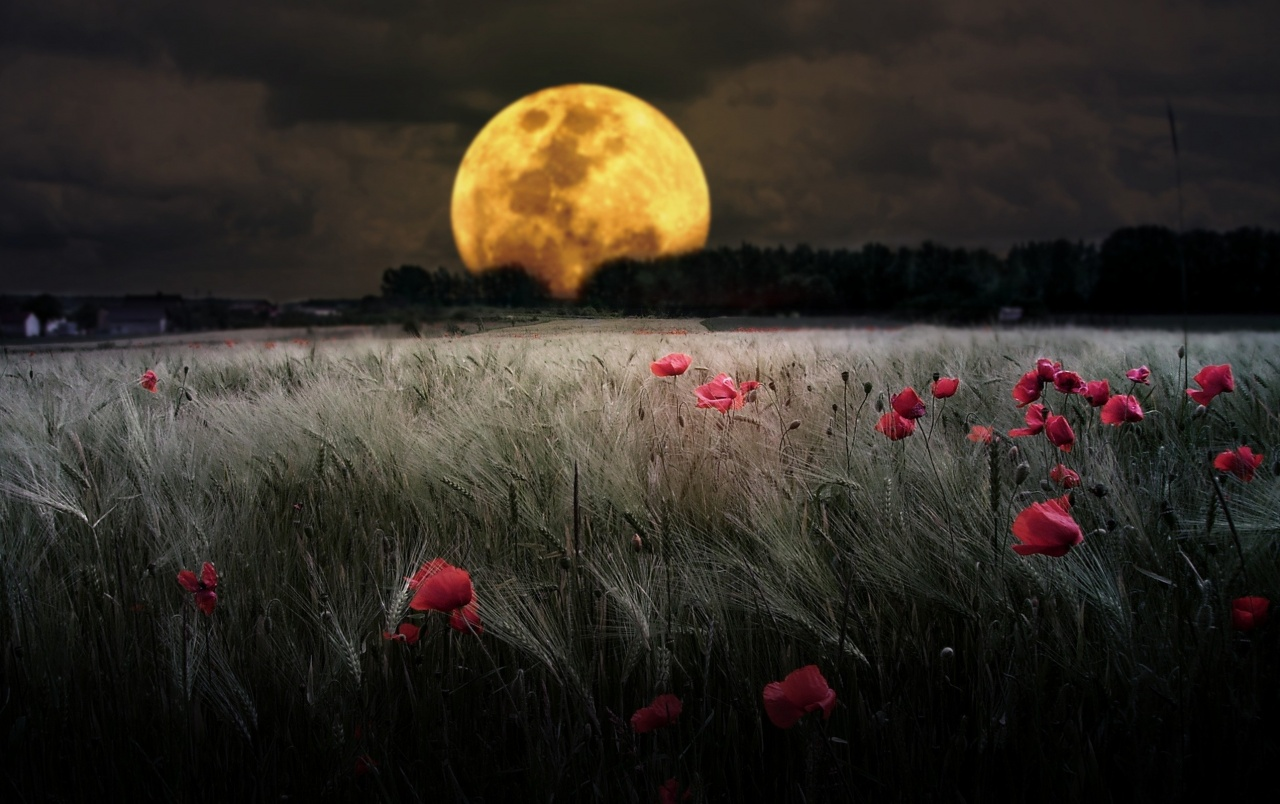 Dark Night Moon Poppy Field wallpapers