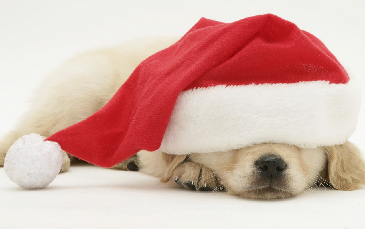 Santa Puppy wallpapers