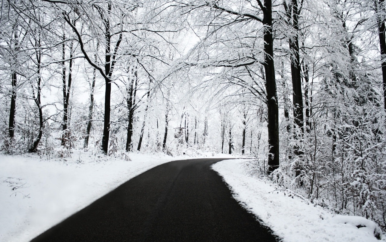 Winter Forest & Road wallpapers