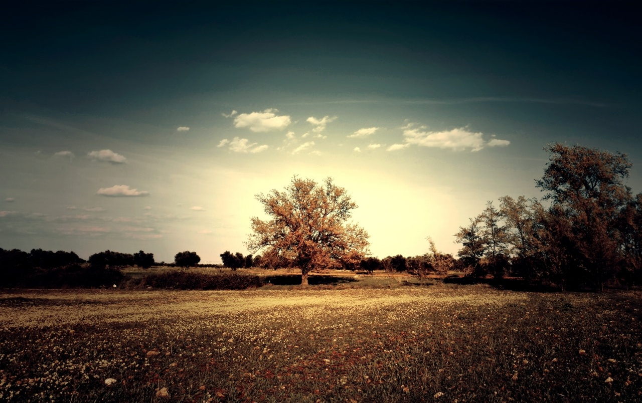 Clouds Trees & Field Contrast wallpapers