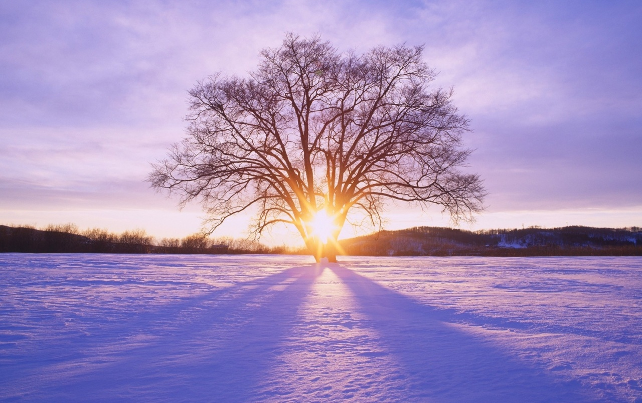 Shiny Sun Tree & Snow Scenery wallpapers