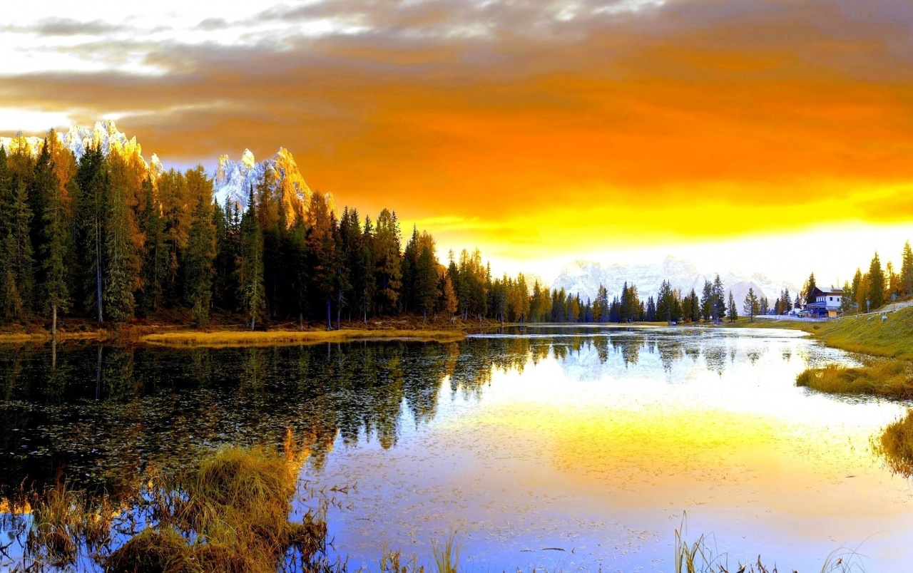 Orange Sky Forest Sea & Grass wallpapers