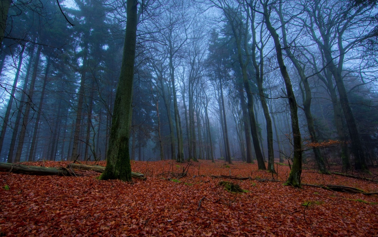 Mysterious Forest Amp Red Leaves Wallpapers Mysterious