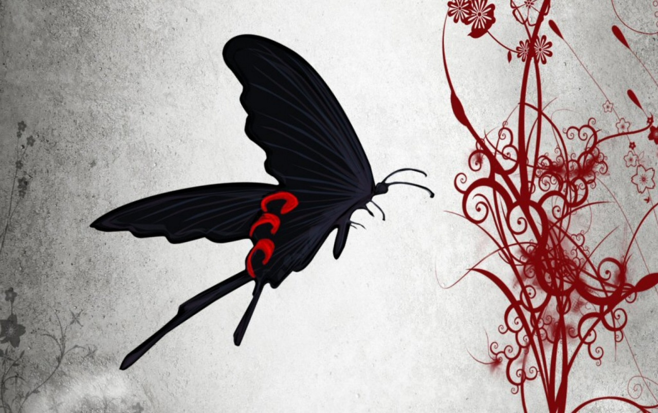 Black Butterfly Red Flower Wallpapers Black Butterfly Red Flower Stock Photos