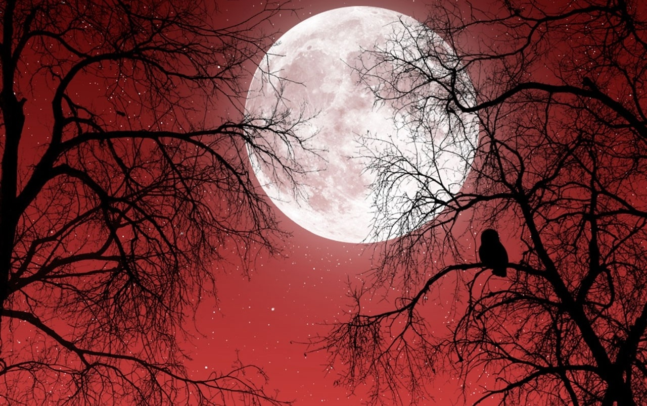 Full Moon Red Sky Dark Trees Wallpapers And Stock Photos