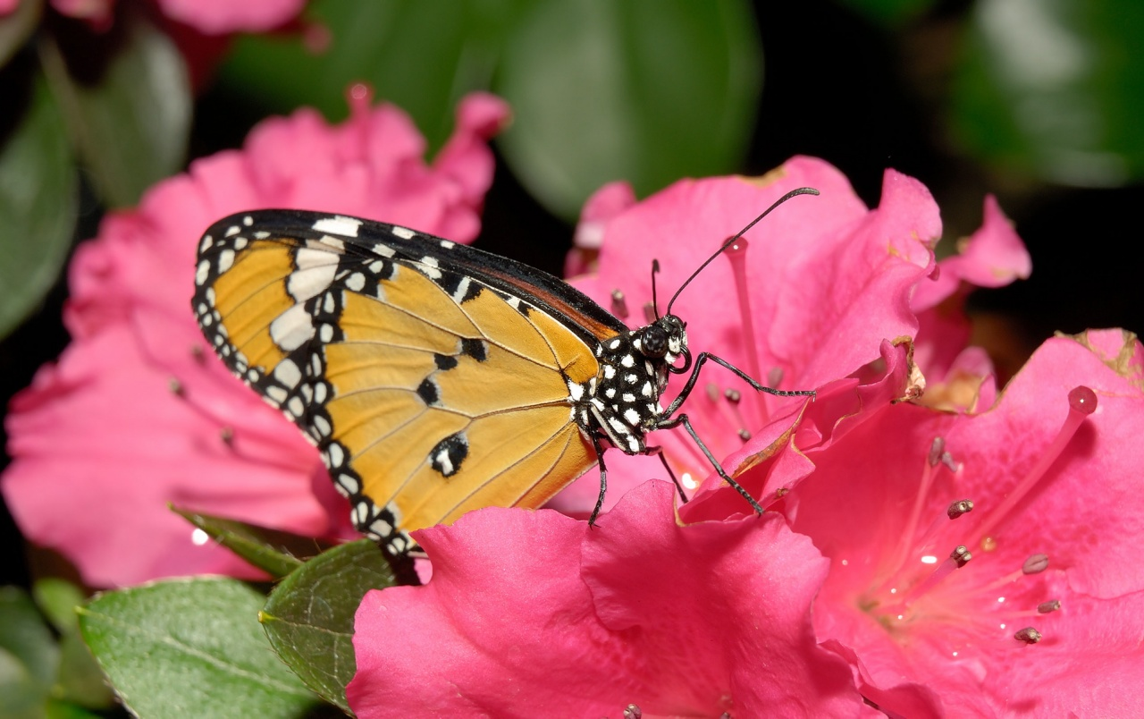 Butterfly Pink Flower wallpapers