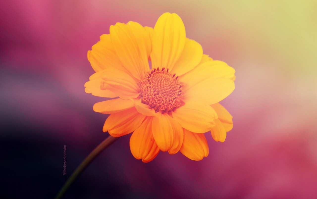 Yellow Flower On Pink Background Wallpapers Yellow Flower On Pink
