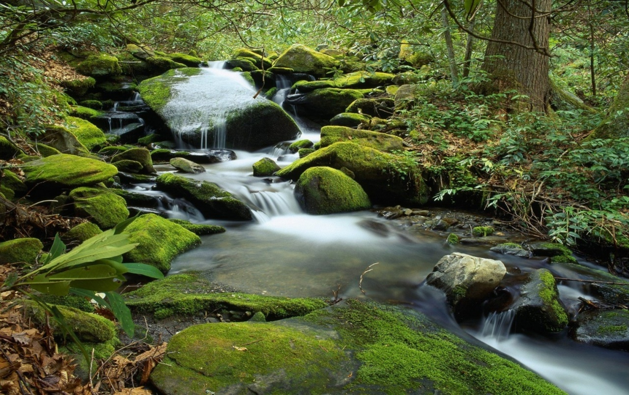 Stones Moss Waterfall Forest Wallpapers