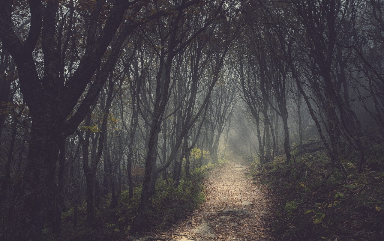 Dark Trees Hd Wallpapers: Mysterious Forest & Small Path Wallpapers