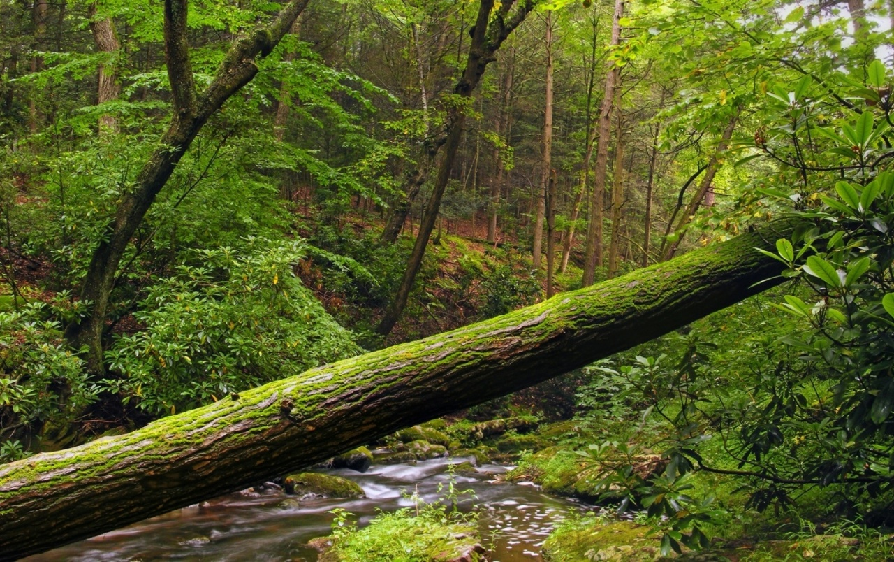 Forest tree log creek wallpapers forest tree log for Tree log