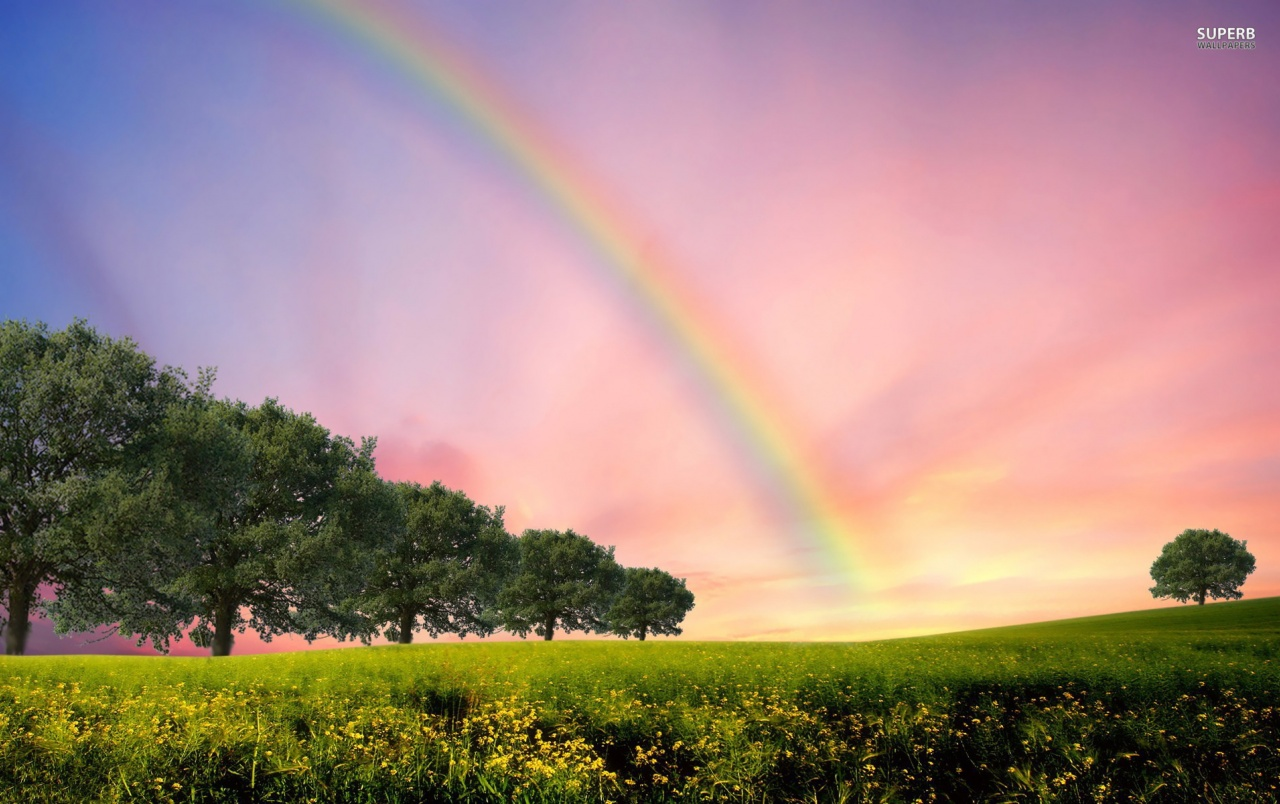 Rainbow Trees Flowerfield Wallpapers And Stock Photos
