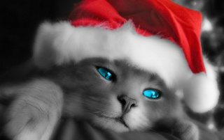 Kitty Santa wallpapers