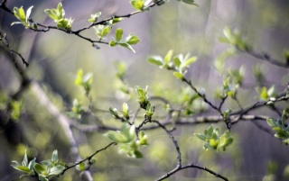 Spring Branches wallpapers