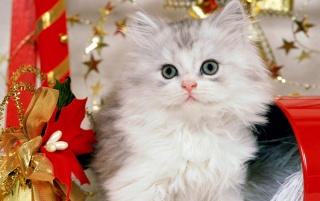 Santa's Pussy wallpapers