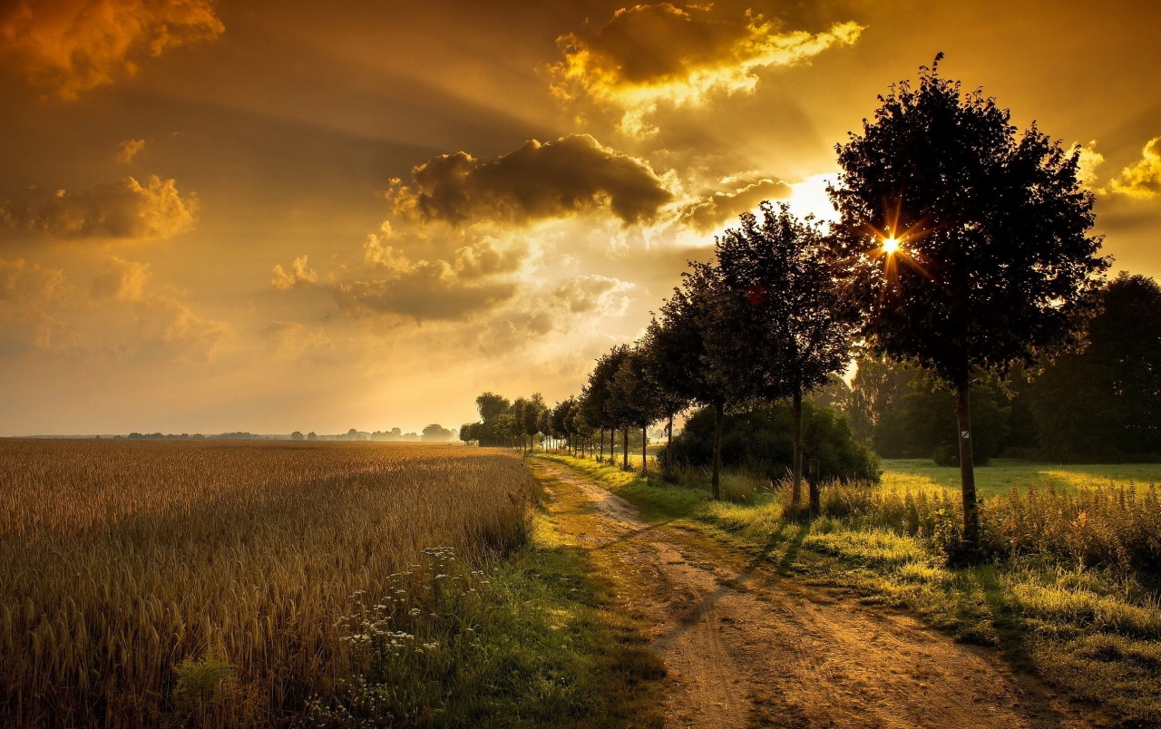 Wheat Field Path Trees Sunset wallpapers