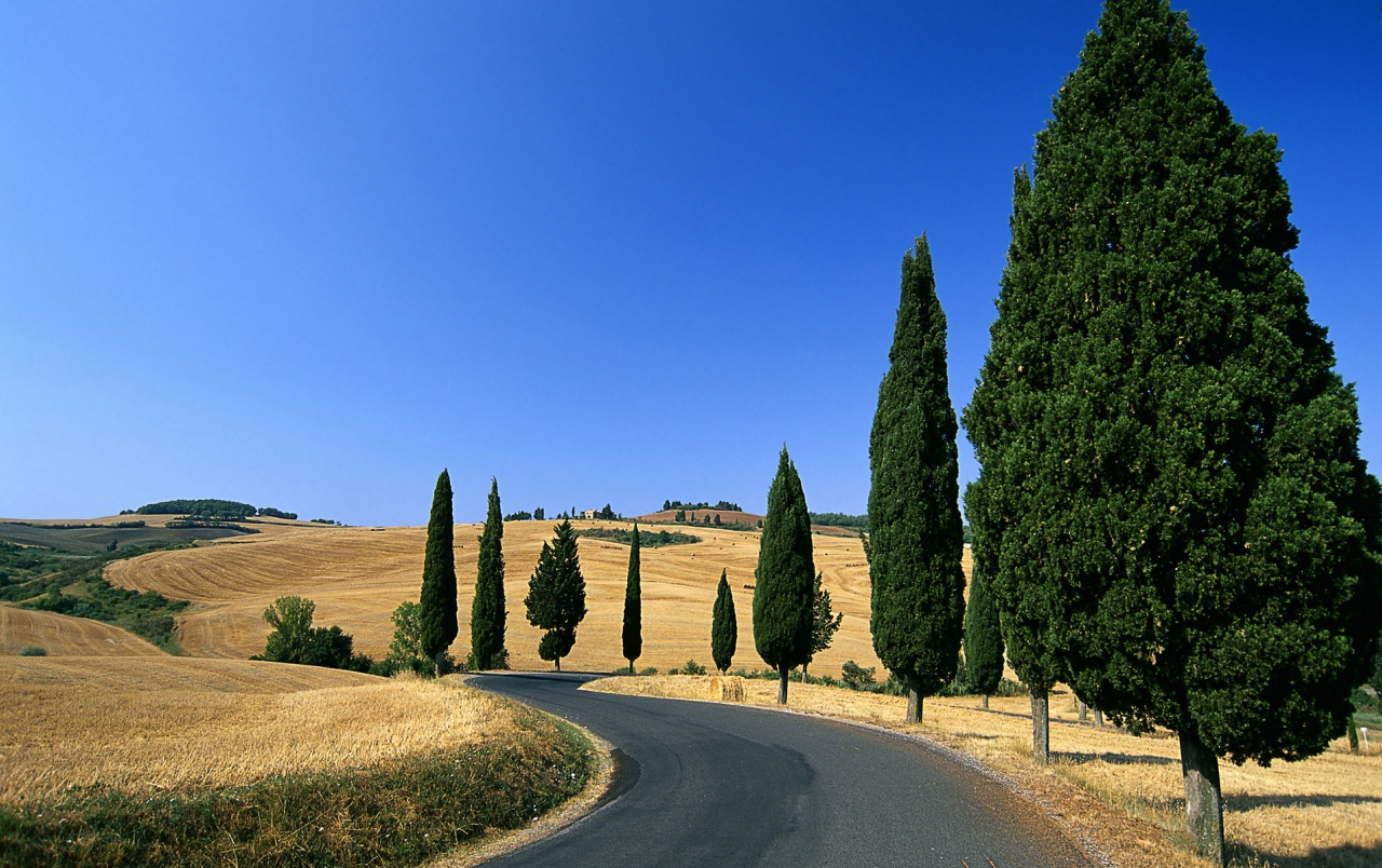 Field & Trees Italy wallpapers