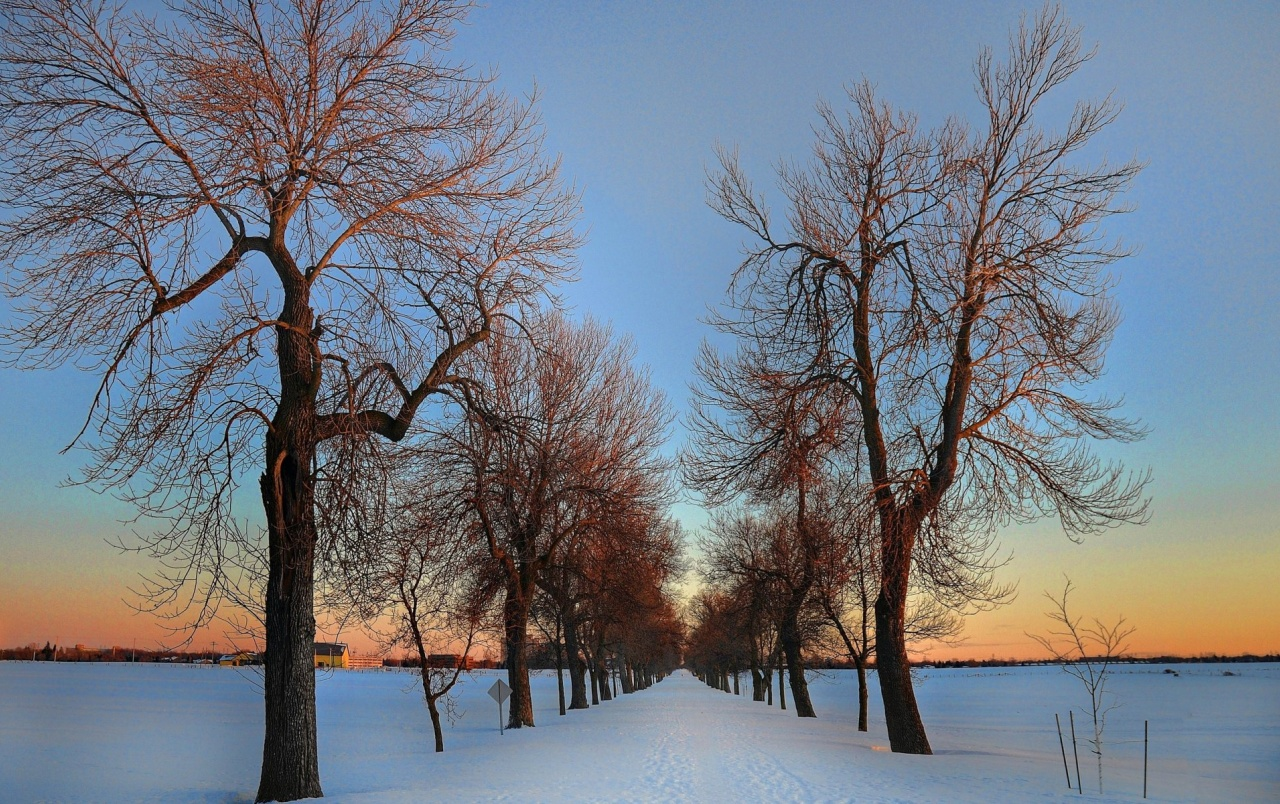 Lovely Bare Trees Winter Road wallpapers