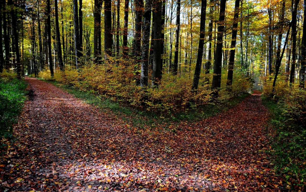 autumn forest paths leaves wallpapers