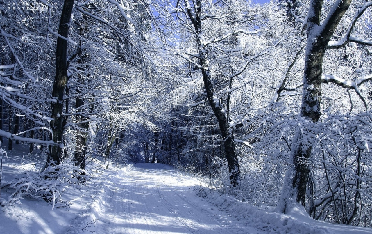 Snowy Forest Road Winter wallpapers