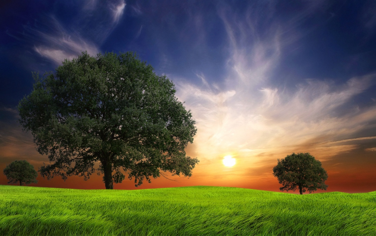 Grass Field Trees Sun Sky wallpapers