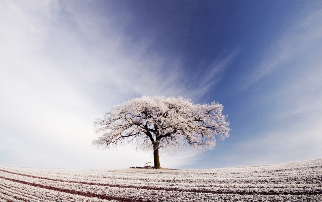 Arable Tree Snow Sky wallpapers