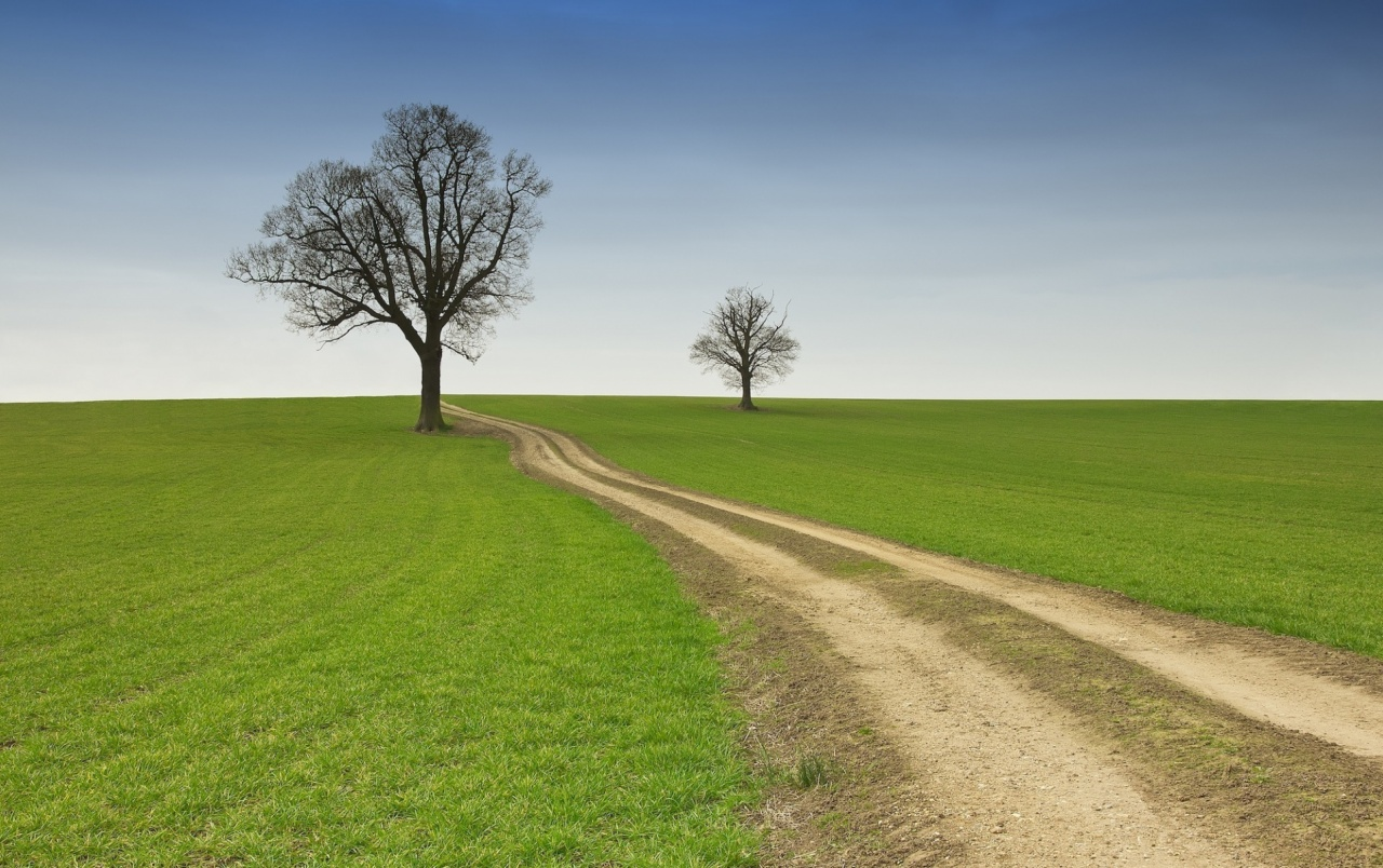 Sky Path Trees Grass Field Wallpapers