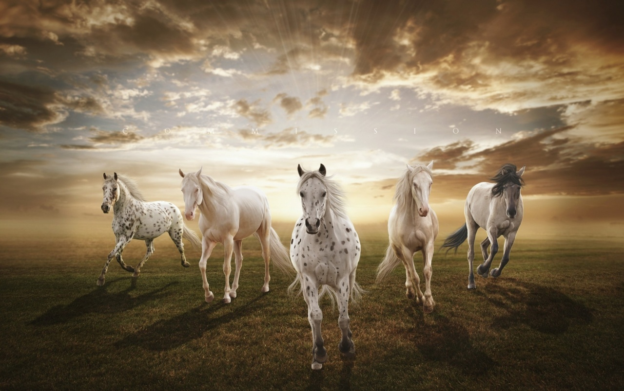 Horses Running Field Sun Cloud wallpapers