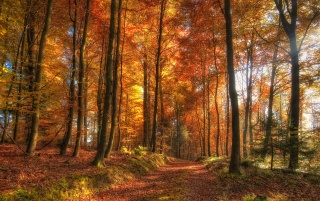 HDR Autumn Forest wallpapers