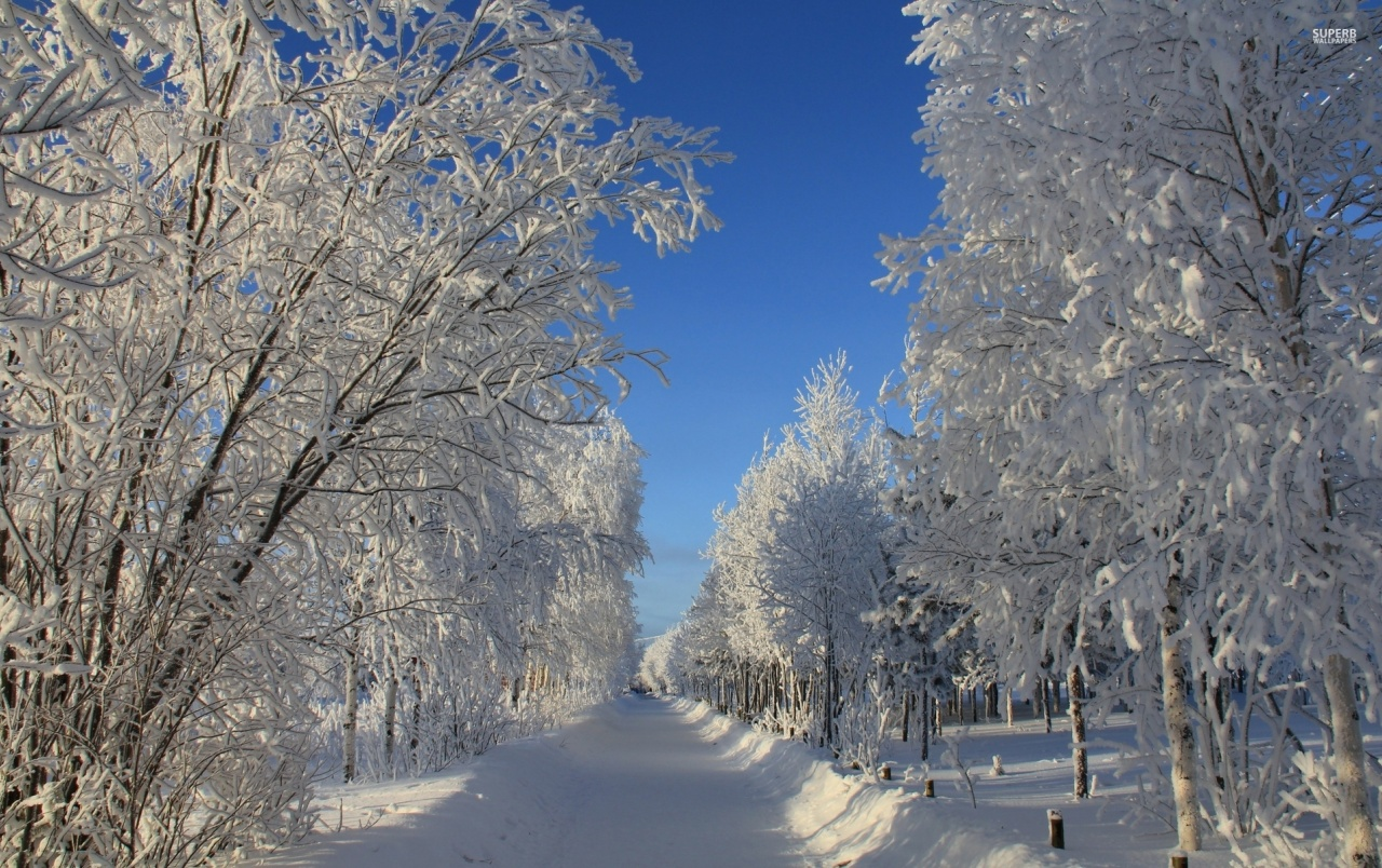Pretty Path Forest Winter Snow wallpapers