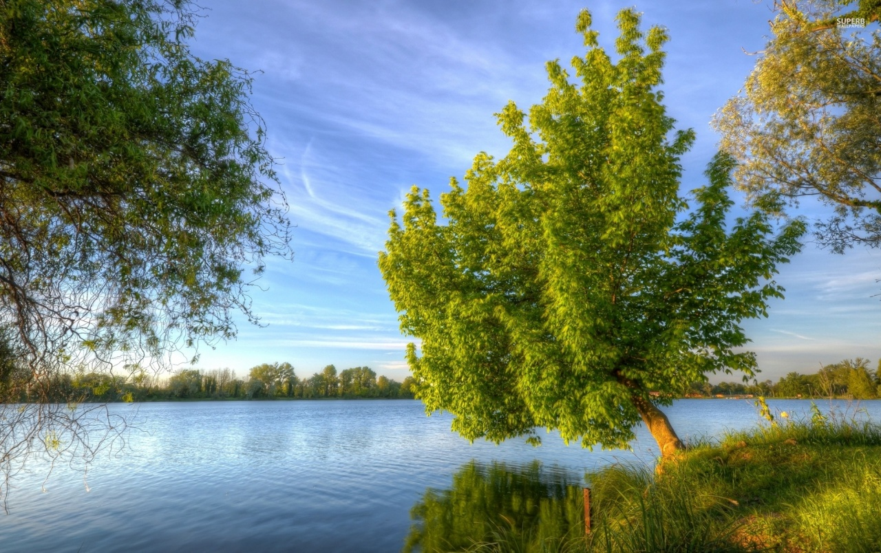 Trees Lake Shore Grass Sky wallpapers