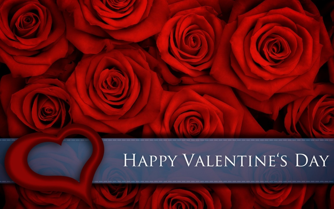 Red Roses for Valentines Day wallpapers