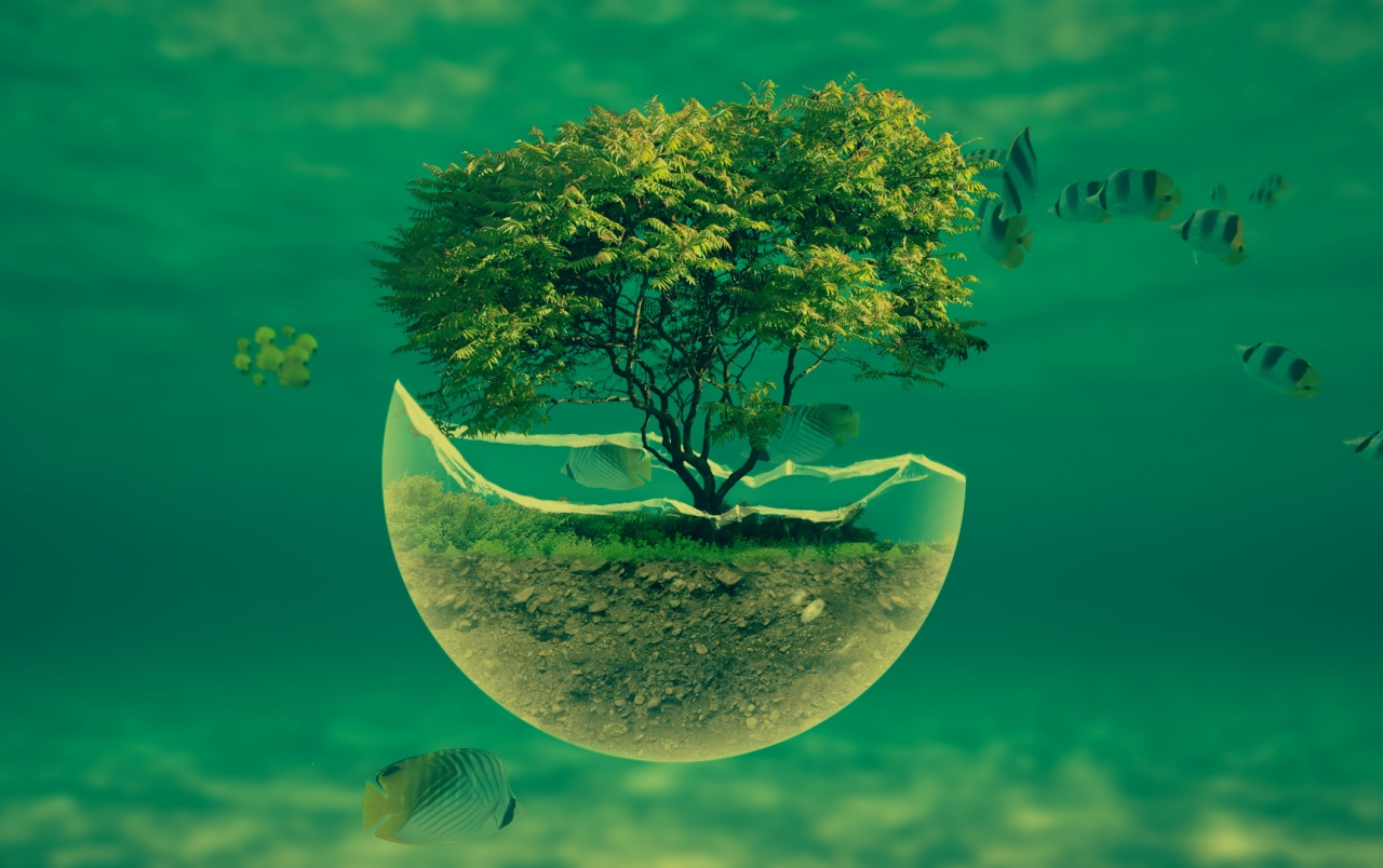 Tree Underwater Fishes Wallpapers Tree Underwater Fishes