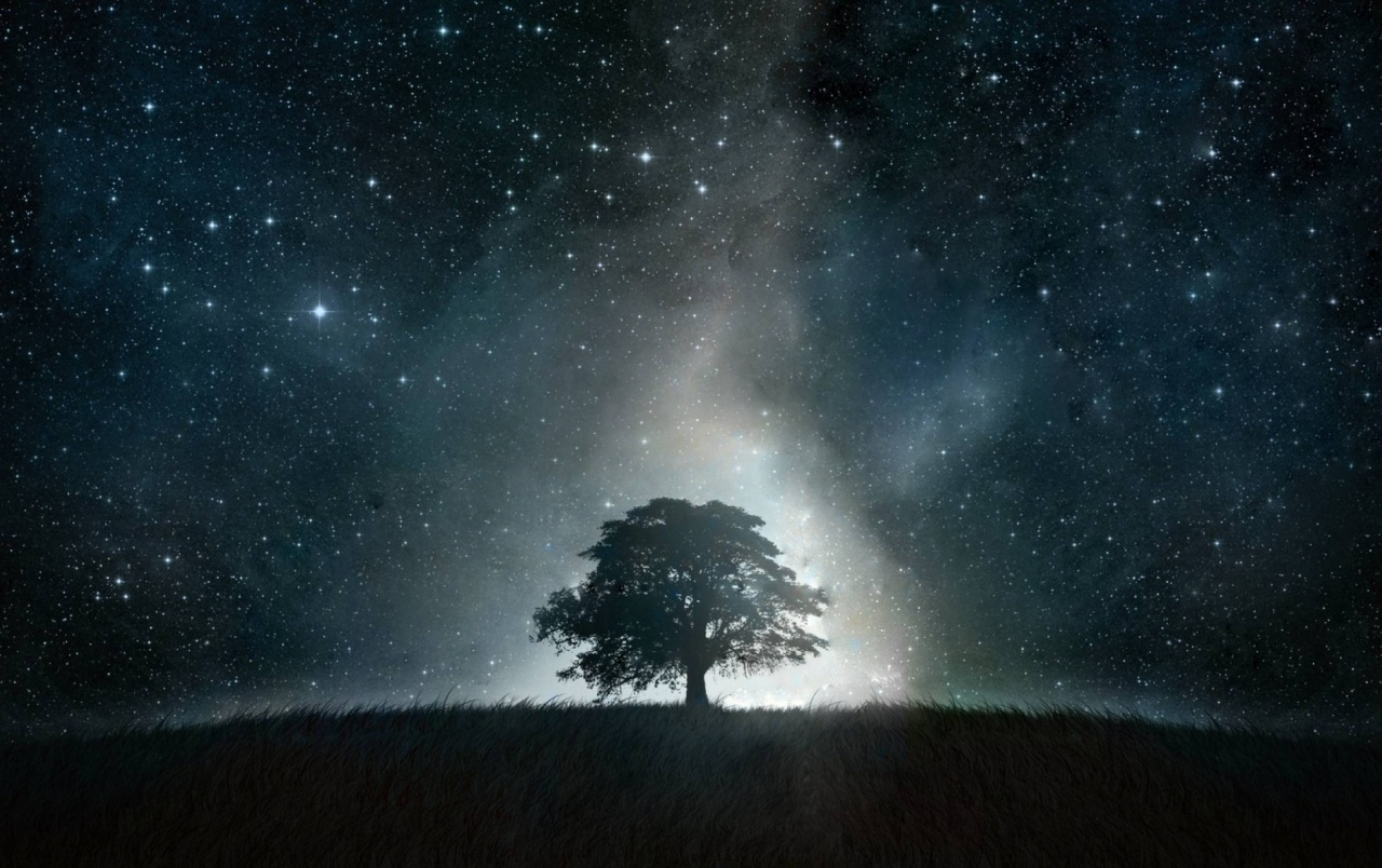 tree grass stars glowing night wallpapers