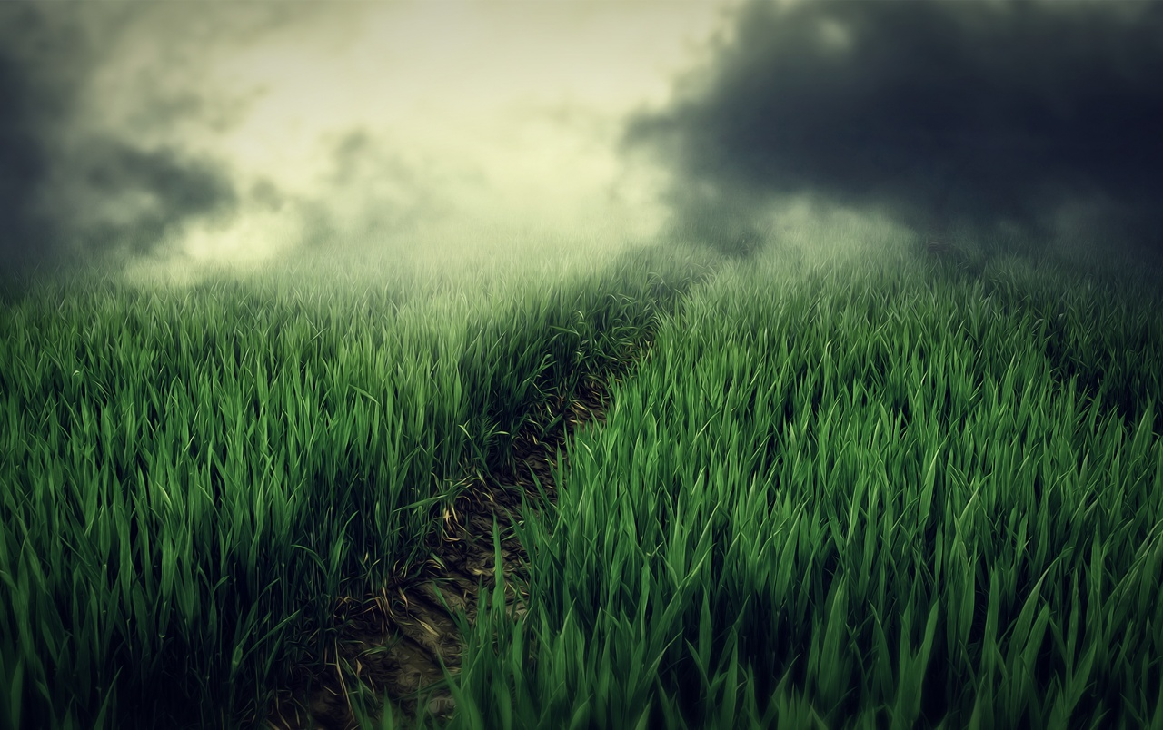 Fresh Grass Small Trail Misty wallpapers