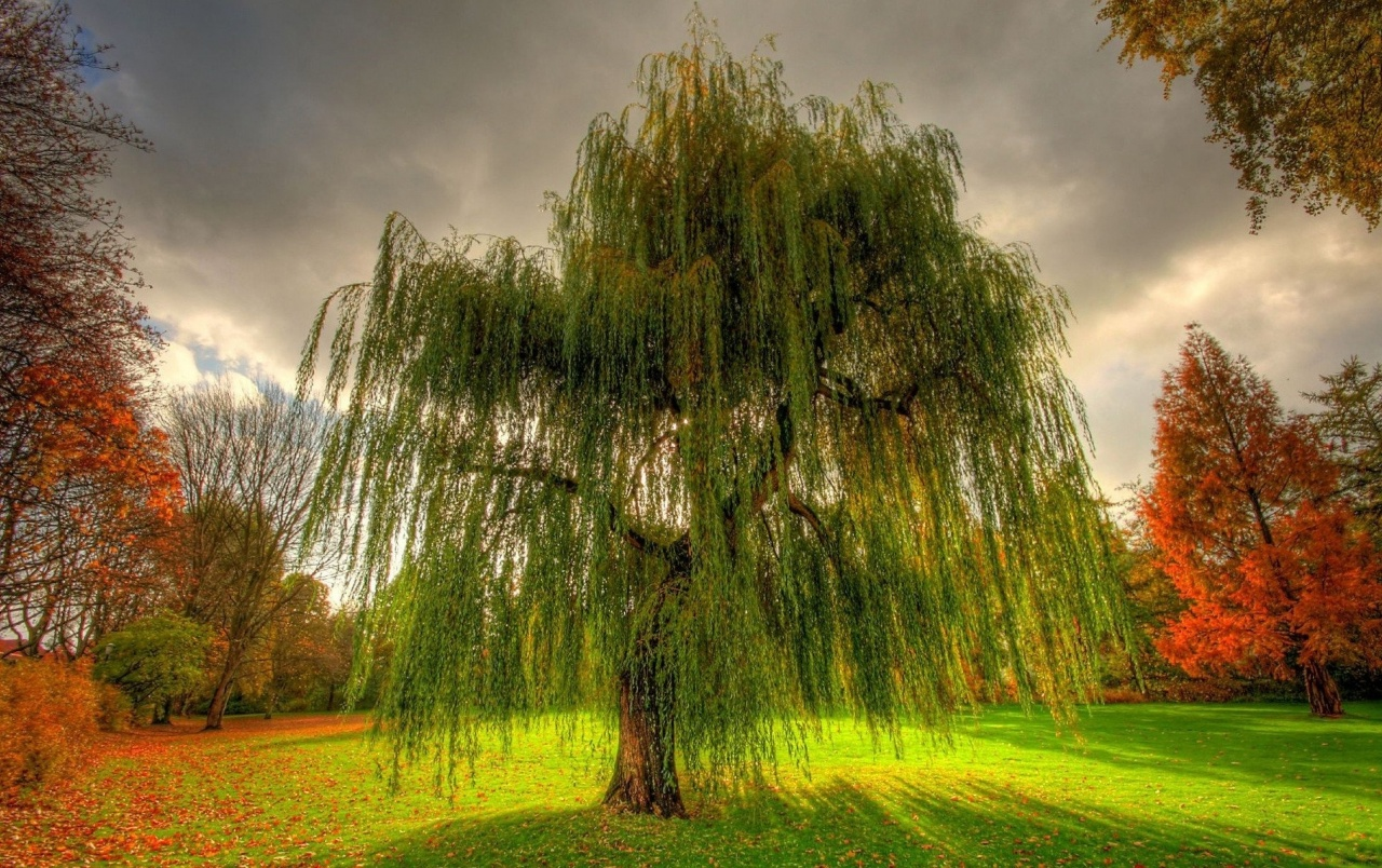 Willow Twigs Grass Field Cloud wallpapers