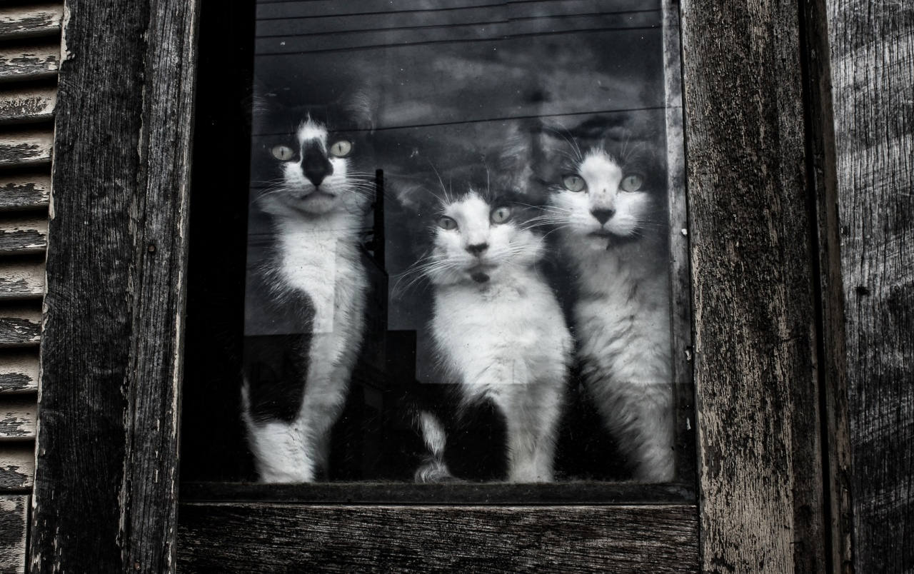 Curious Black and White Kittens wallpapers