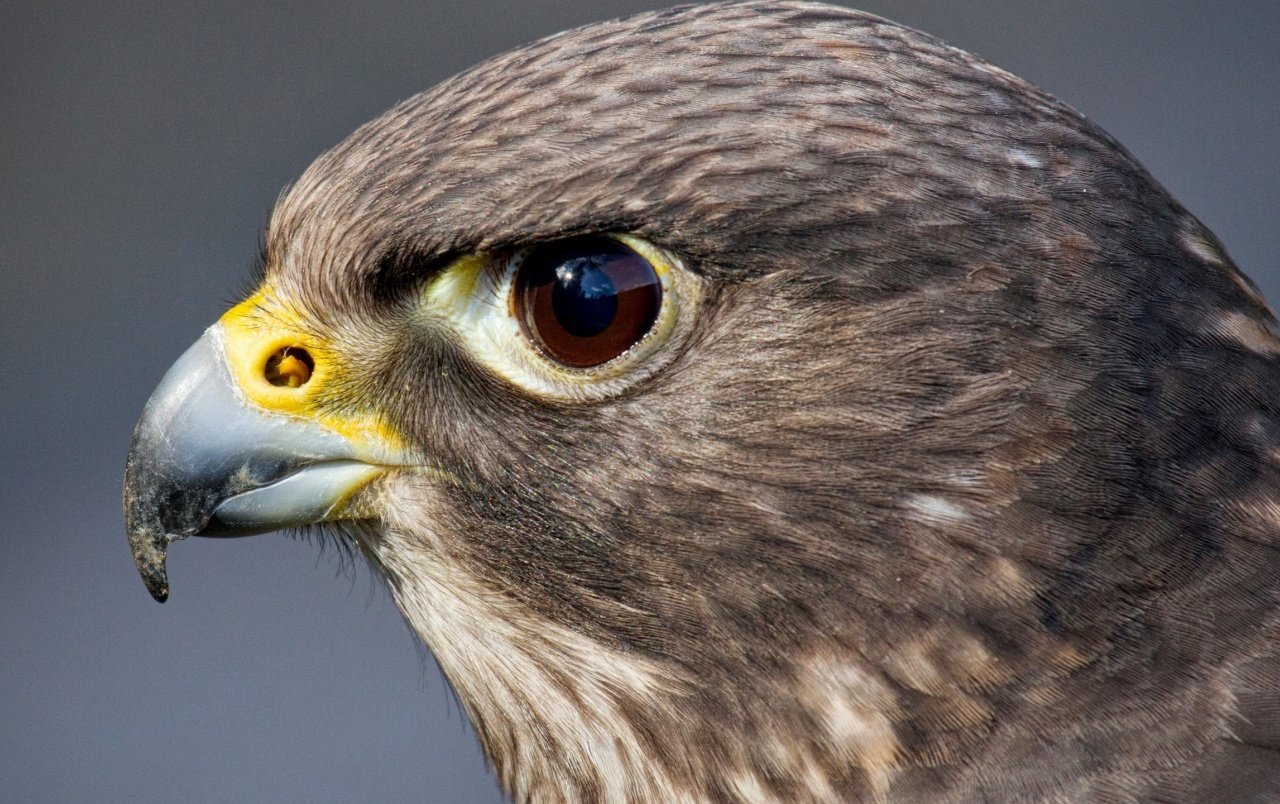 Hawk close up wallpapers hawk close up stock photos - Hawk iphone wallpaper ...