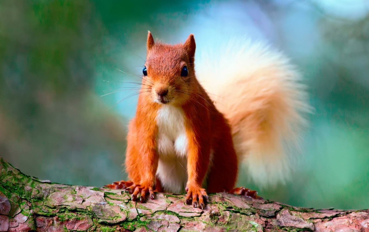Cute Red Squirrel wallpapers | Cute Red Squirrel stock photos