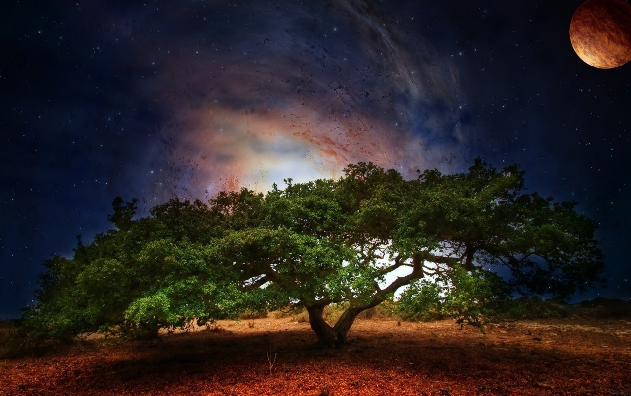 Tree Space Planet Stars Night wallpapers