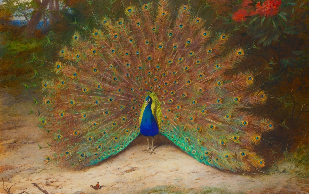 Asombroso del pavo real Feathering wallpapers
