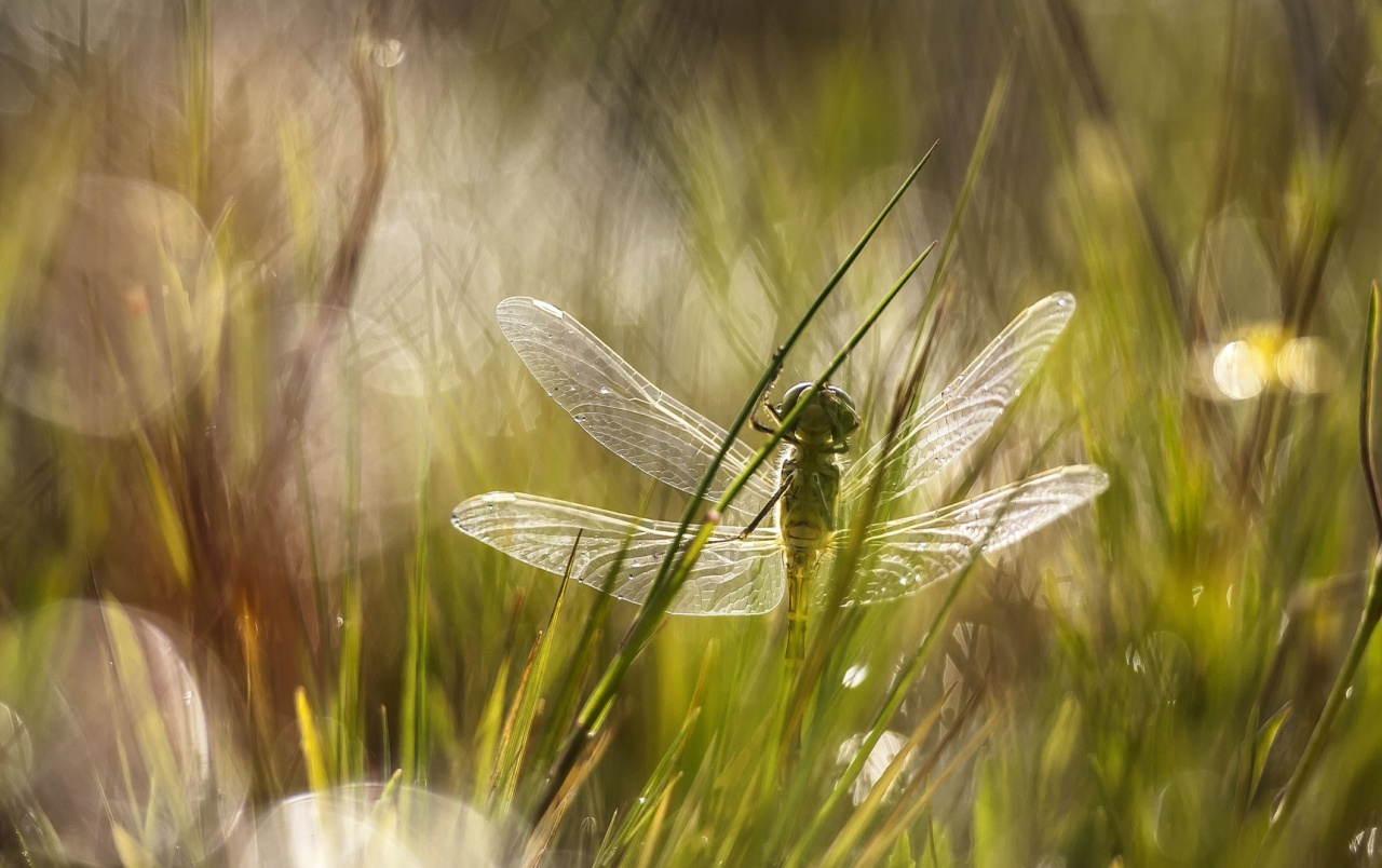Dragonfly in the Grass wallpapers